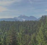 Arbres et montagnes images stock
