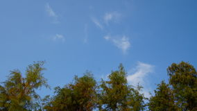 Arbres et nuages de ciel et blancs bleus Photographie stock