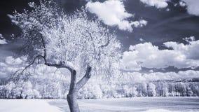 Arbres et nuages sur un ciel bleu dans la lumière infrarouge Photos stock