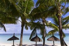 Arbres et parasols de noix de coco en île des Îles Maurice Photographie stock