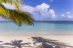 Arbres et parasols de noix de coco en île des Îles Maurice Image stock
