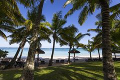 Arbres et parasols de noix de coco en île des Îles Maurice Images stock