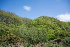 Arbres et paysage de buissons contre le ciel bleu Images stock