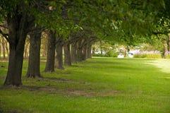 Arbres et pelouse Photo stock