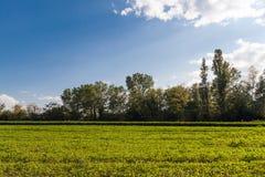 Arbres et pelouse Photo libre de droits