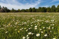 Arbres et pelouse Photographie stock libre de droits