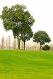 Arbres et pelouse Photographie stock