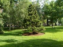 Arbres et pelouse, jardin public de Boston, Boston, le Massachusetts, Etats-Unis Photo stock