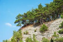 Arbres et pierre des roches de falaise Image libre de droits