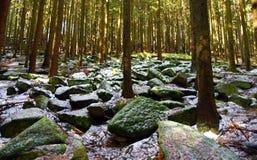 Arbres et pierres dans la forêt Image stock