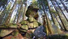 Arbres et pierres dans la forêt Photos libres de droits
