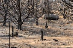 Arbres et réservoir de propane après le feu sauvage Photographie stock libre de droits