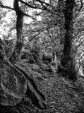 Arbres et roches dans le ménage Clough photo stock