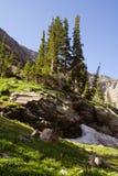 Arbres et roches dans les montagnes dans le Colorado Photographie stock libre de droits
