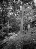 Arbres et roches en vallée de Colden image stock