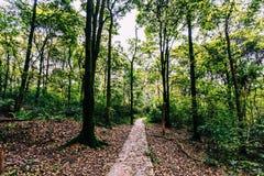 arbres et route dans forrest Photographie stock