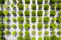 Arbres et trottoir dans des places d'échecs Parc urbain Image stock