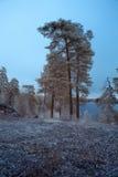 Arbres et un lac Image libre de droits
