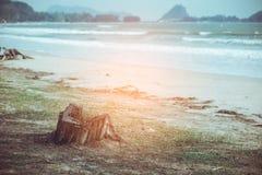 Arbres et un tronçon d'arbre mort énorme sur la plage lumière orange Vint Images libres de droits