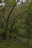 Arbres et usines dans la forêt images stock