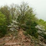 Arbres et végétation dans un jour nuageux Photo libre de droits