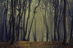 Arbres fantasmagoriques dans le brouillard de la forêt Image stock