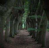 Arbres fantasmagoriques près de Zwolle Images libres de droits