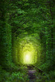 Arbres fantastiques - tunnel de l'amour avec la quirlande électrique Photo libre de droits