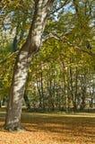 Arbres feuillus en stationnement d'automne Photographie stock