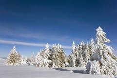 arbres figés Image stock