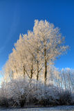 arbres figés image libre de droits