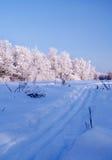 Arbres figés dans la forêt de l'hiver photo stock