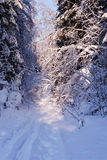 Arbres figés dans la forêt de l'hiver photographie stock libre de droits