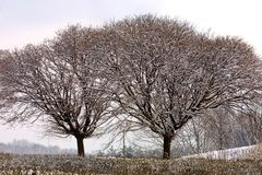 Arbres figés en hiver Images libres de droits