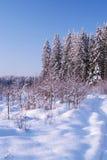 Arbres figés en hiver Photographie stock libre de droits