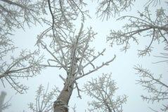 Arbres figés en hiver Image stock