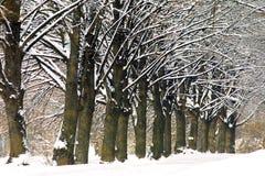 Arbres figés en stationnement de l'hiver Photographie stock libre de droits