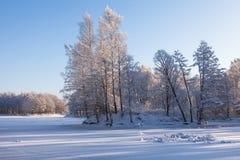 Arbres figés en stationnement de l'hiver Photo stock