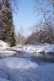 Arbres figés sur le fleuve photo stock