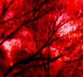 Arbres flambés rouges Images stock