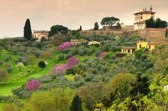 Arbres fleuris pourpres de judas d'arbres sous le belvédère de forte à Florence, Italie images stock