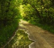 Arbres fleurissants d'allée d'acacias au printemps après la pluie et le vieux chemin de terre Images stock