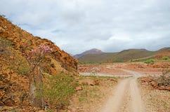 Arbres fleurissants de bouteille, montagnes, roches rouges, île de Socotra, Yémen Photographie stock
