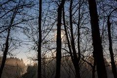 Arbres foncés décrits contre le ciel Photographie stock libre de droits