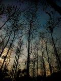 Arbres foncés dans la jungle Images libres de droits