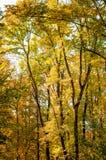 Arbres forestiers à l'arrière-plan d'automne image stock