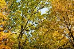 Arbres forestiers à l'arrière-plan d'automne photos libres de droits