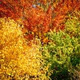 Arbres forestiers à l'arrière-plan d'automne photo libre de droits