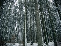 Arbres forestiers photos stock