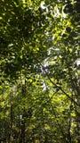 Arbres forestiers Photographie stock libre de droits